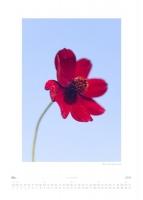 Mai - Salixfrageceae